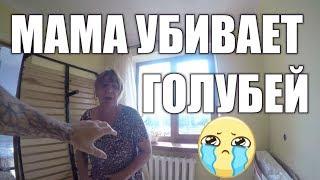 МАМА УБИВАЕТ ГОЛУБЕЙ