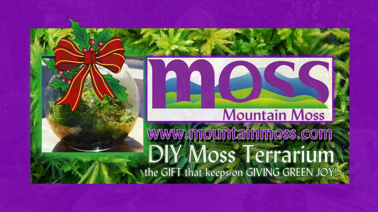 Diy Moss Terrarium Youtube