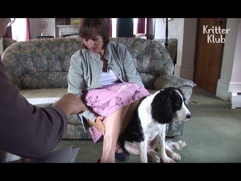 Dog Detects Cancer, Saving Owner's Life | Kritter Klub