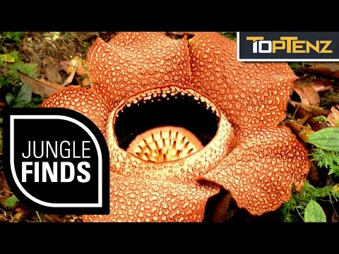 Top 10 STRANGE THINGS Found in the JUNGLE