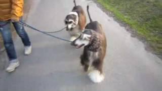 日常の散歩.