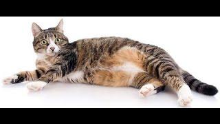 Смешные коты 2 (Funny Cats Compilation)