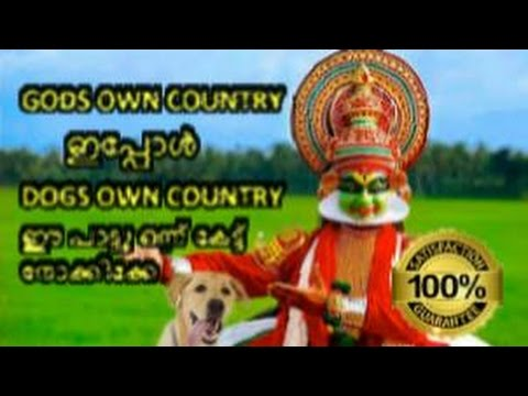 GODS OWN COUNTRY  ഇപ്പോൾ DOGS OWN COUNTRY | Malayalam parady song