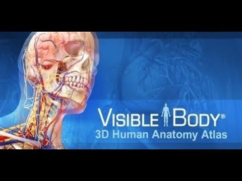How To Download And Install Visible Body  Human Anatomy Atlas Error Free