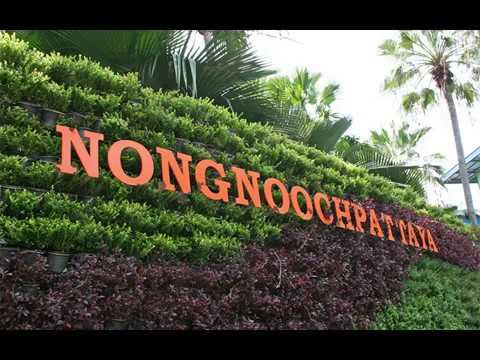 Unique Nong Nooch Vine