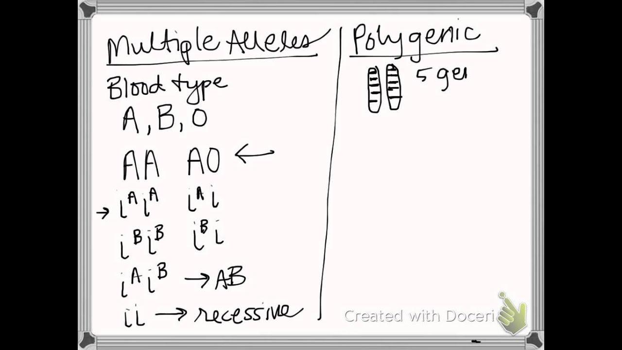 Polygenetic Traits Vs Multiple Alleles