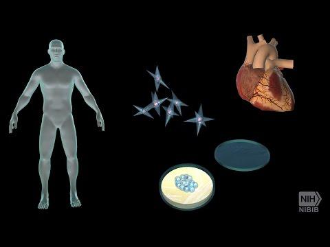 Tissue Engineering and Regenerative Medicine | National