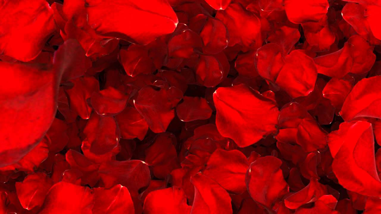 Valentine background video effects background video loop valentine valentine rose alpha - Background for valentine pictures ...