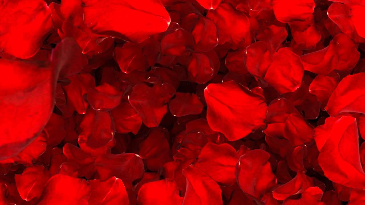 Valentine Background Video Effects, Background Video Loop, Valentine  VALENTINE ROSE Alpha Channel,   YouTube