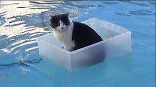【面白い動画】 かわいい猫 - かわいい犬 - 最も面白いペットの動画 #27