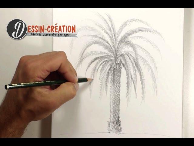 Comment Dessiner Un Palmier Facilement Youtube