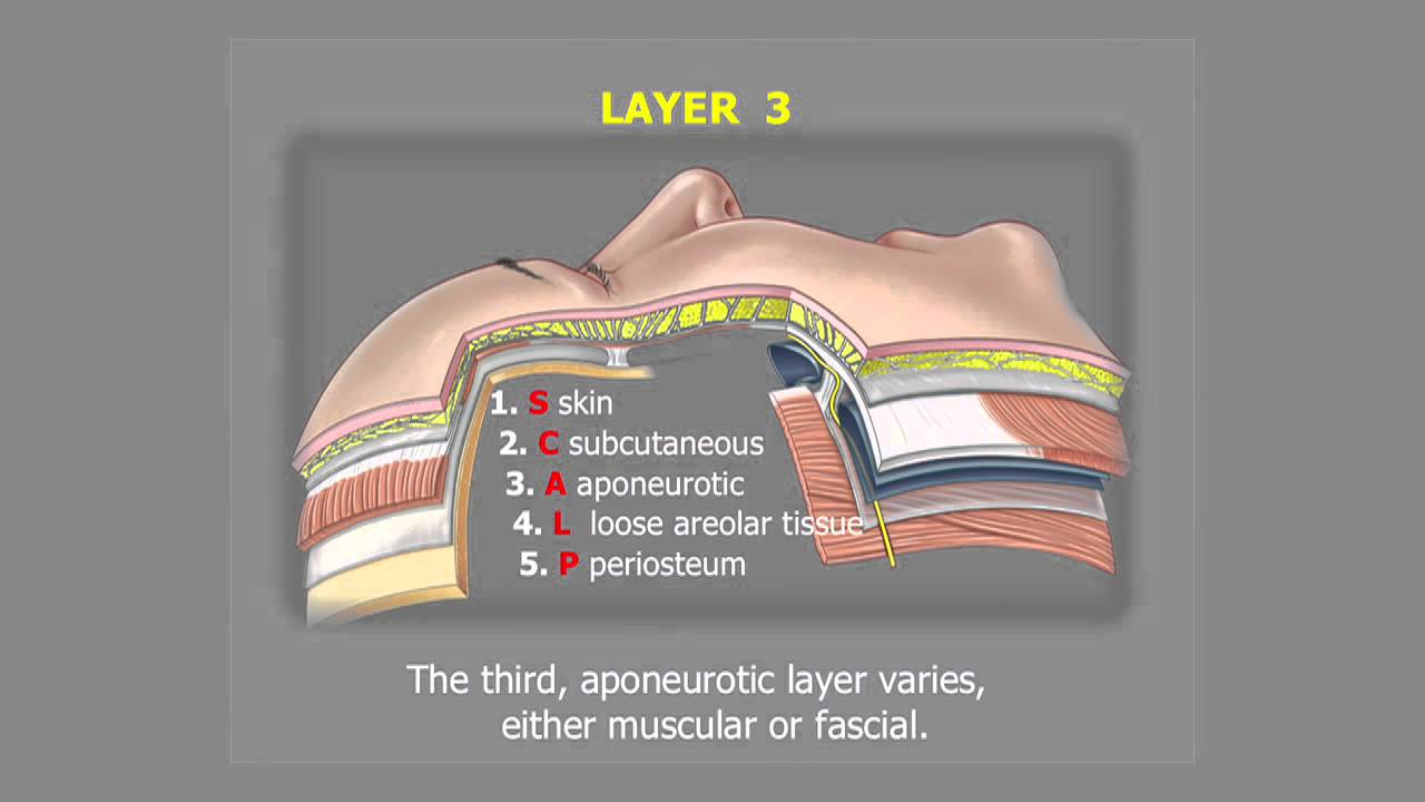 Understanding Facelift Anatomy - Dr Bryan Mendelson - YouTube