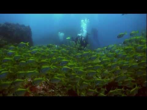 Long Reef Dive Promo