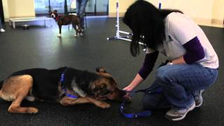 Shelter School At Phs | Train Your Dog Month