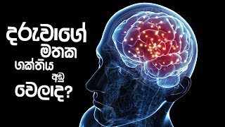 Piyum Vila   දරුවාගේ මතක ශක්තිය අඩු වෙලාද?   01 - 04 - 2019   Siyatha TV Thumbnail