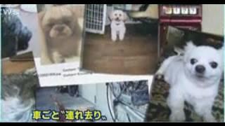 """Dognapped! 車ごと盗難の""""13匹ワンちゃん"""" (J-NEWS!)"""