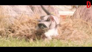 Коты Ассасины