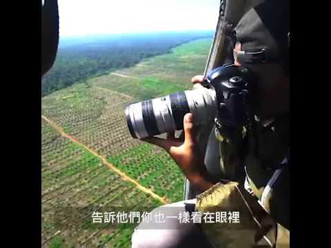 【守護森林】驚人景象!空拍印尼雨林揭砍伐真相
