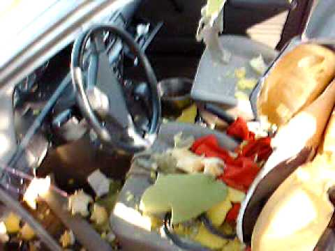 The Dog Wrecked Interior Of My Car Hond Sloopt Auto