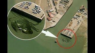 3 Przerażające Potwory Złapane Przez Google Maps!