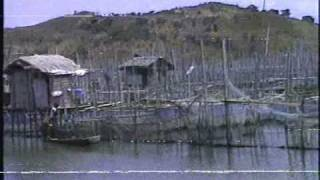 Tilapia Cage Farming