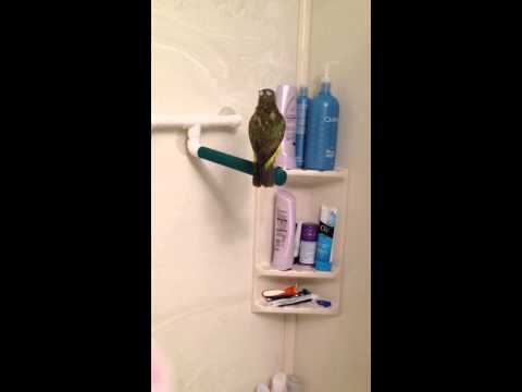 A BIRD THAT SHOWERS!!! (and talks)