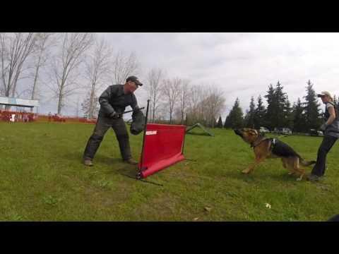 competitive-dog-training-by-prodogz-&-jason-lake-rogue-valley-oregon