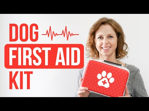 Dog First Aid Kit: How To Make One & How To Use It