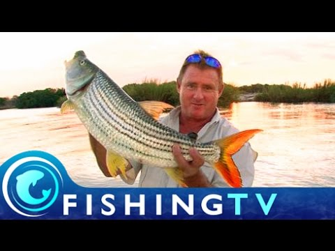 The Elusive Tigerfish: Pt 1