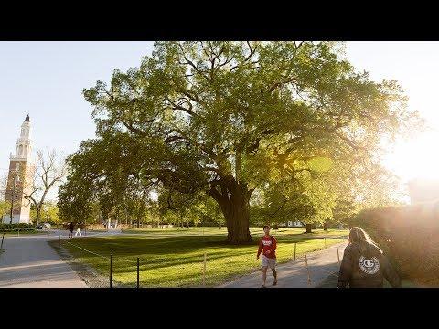 The Great Elm Tree