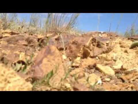 Реальное видео инсент