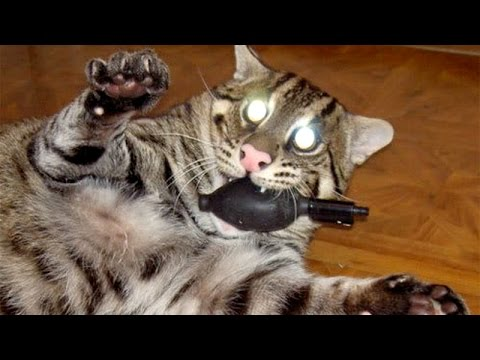IMPOSSIBLE NOT TO LAUGH - Funniest ANIMAL videos ever