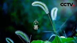 CCTV4-央视公益广告:赏二十四节气 品五千年文明 小暑 | CCTV中文国际