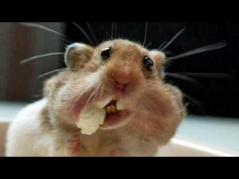 Thumbnail: TRY TO HOLD YOUR LAUGH CHALLENGE - Super funny ANIMAL videos!