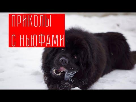 НАРЕЗКА ВИДЕО С НЬЮФАМИ//ПРИКОЛЫ