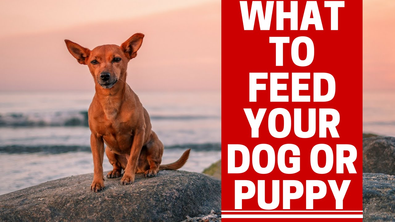 Food Should You Feed Your Dog