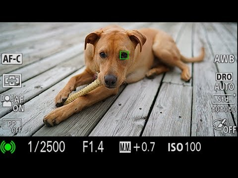 Sony A6400 : L'Eye AF pour les animaux est disponible