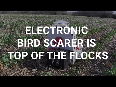 Electronic Bird Scarer Is Top Of The Flocks