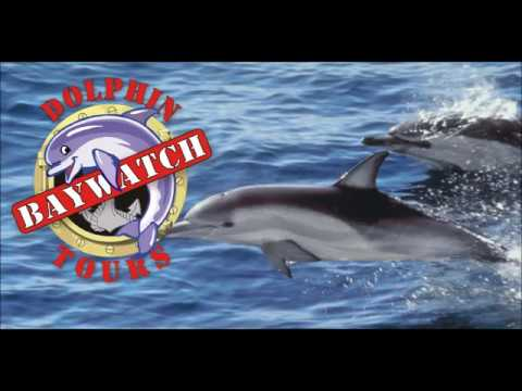 Image result for Dolphin watching expedition. galveston