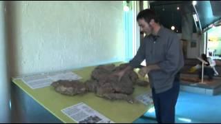 http://www.latrobe.edu.au/ Minmi was an Australian Ankylosaur, an a...