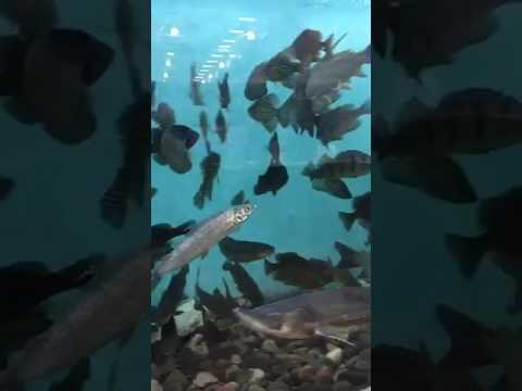 DNR Conservation practice (freshwater fish)