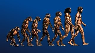 William Von Hippel | How We Evolved From Tree Swinging To Human Being | Modern Wisdom #041