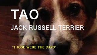 ジャック・ラッセル・テリア…こんな犬でした.