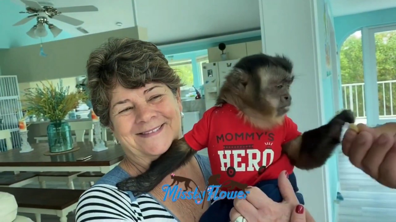 Happy 4th of July to all from Monkeys Toby, Angelika, Russel & our family...See update on baby birds
