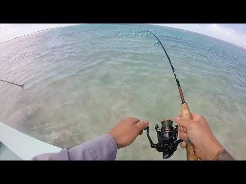 Turks and Caicos fishing Bonefish & Barracuda