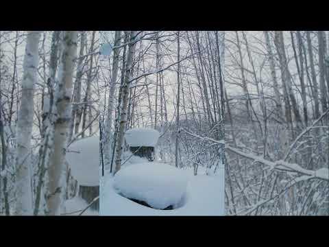 Зимняя природа вокруг Радужного