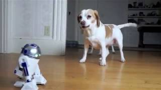 Dog vs Zombie R2D2 Prank! Funny Dogs