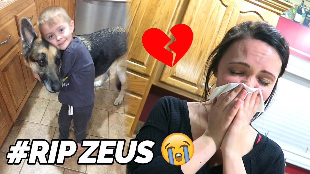 ROMAN ATWOOD DOG DIED | #RIPZEUS