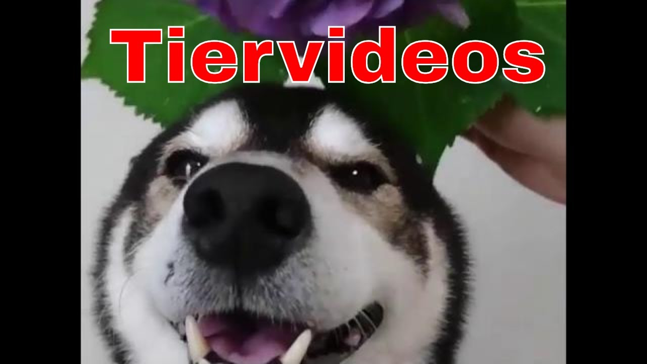 Youtube Lustige Tiere