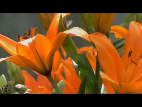 Yakuro -  Stive Morgan  - Voices Of Infinity